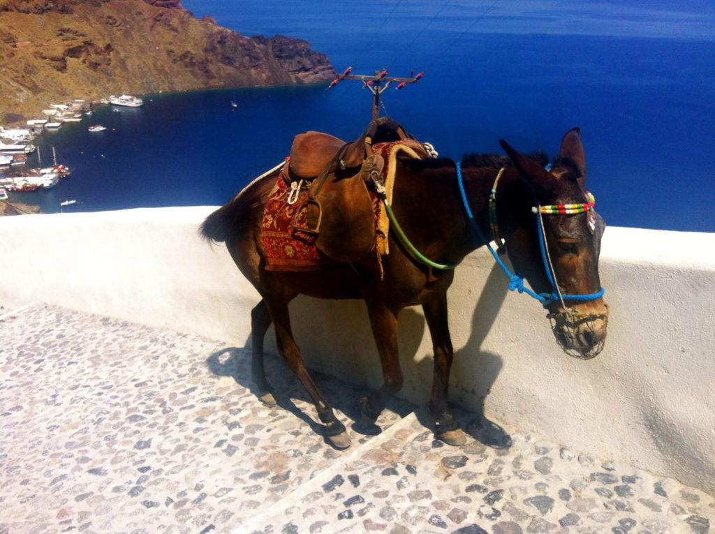 corfu donkeys - greek donkeys - donkeys in greece - ionian summer