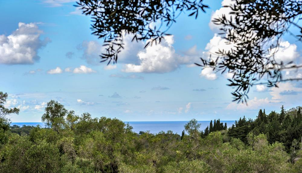 paxos olive trees - paxos olive groves - paxos private villas - ionian summer